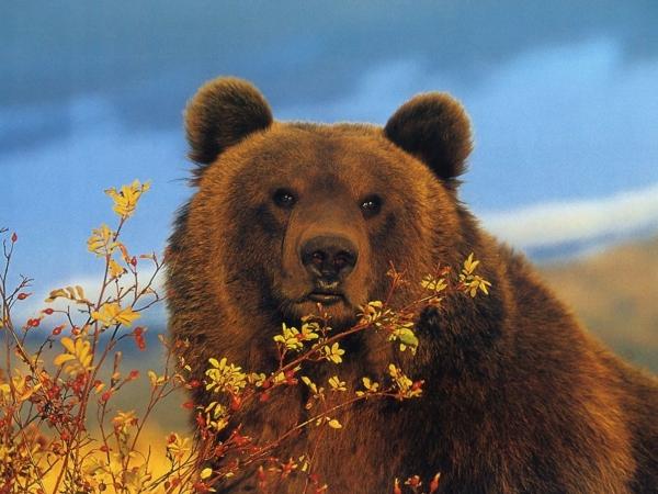 что едят медведи