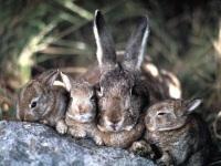 Заяц русак и беляк: как выглядит, где живет, чем питается зимой и летом