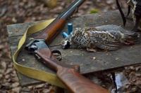 Двуствольное охотничье ружье МР 27 (ИЖ 27): технические характеристики, модификации