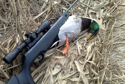 Охота с воздушкой как выбрать качественное пневматическое ружье для охоты