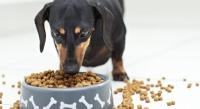 Чем кормить таксу – щенков и взрослых собак: правильное питание и витамины