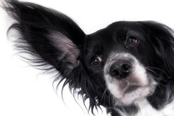 как убрать клеща у собаки