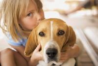 Лишай у собак: симптомы стригущего, мокнущего, розового; лечение – чем мазать