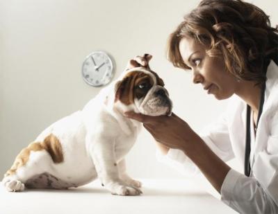Аллергический отит у собак лечение