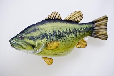 Рыба ротан фото. Фотогалерея более 50 шт
