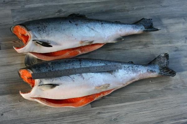 рыба семейства лососевых