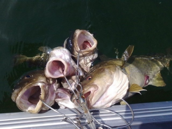 Кукан для рыбы своими руками видео