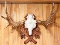 Медальон для рогов: как правильно подготовить охотничий трофей своими руками