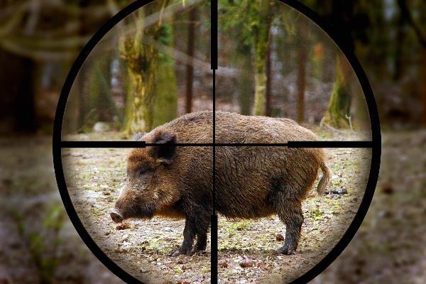 оружие для охоты на кабана