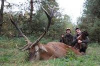 Охота на оленя благородного: с подхода, с собаками, с вышки, с манками и т.д