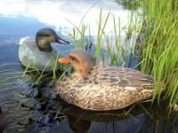 Охота на утку с чучелами: как правильно охотиться и как выбрать утиное чучело