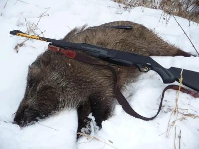 Охота на кабана зимой с подхода