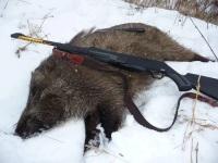 Зимняя охота на кабана: с подхода, с вышки, с собаками, с засидки, загоном