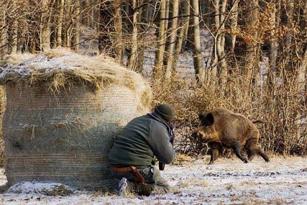 штрафы за охоту