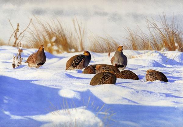 Охота на куропатку зимой