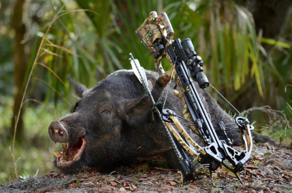 какой арбалет выбрать для охоты