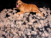 У собаки выпадает шерсть на спине и лапах: почему и что делать с проплешинами