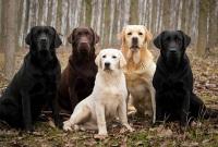 Собака для охоты на кабана и птицу – какая лучше: лайки, дратхаары, ягдтерьеры, гончие