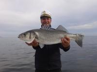 Рыба сибас (лаврак обыкновенный): описание, места обитания и способы ловли