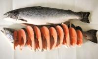 Семейство лососевых рыб: список с названиями, фото и описаниями - внешний вид и места обитания