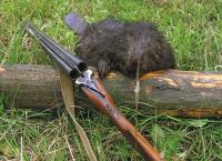 Охота на бобра весной, осенью и зимой: с ружьем, мелкашкой, петлями, капканами