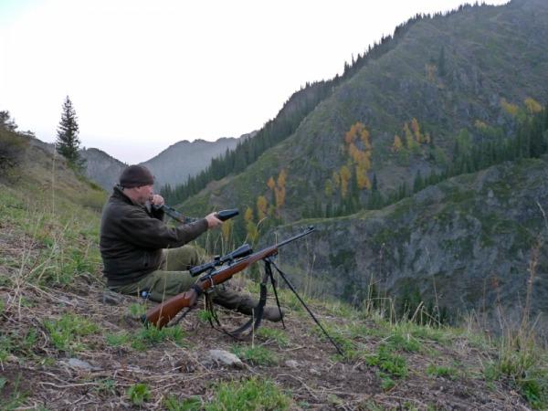 Охота на марала: где и как можно охотиться на благородного оленя – особенности