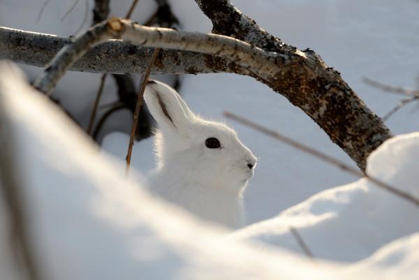 как ловить зайца на петлю