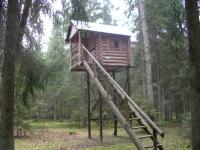 Охота на кабана с вышки: поведение кабана, правила постройки охотничьих вышек