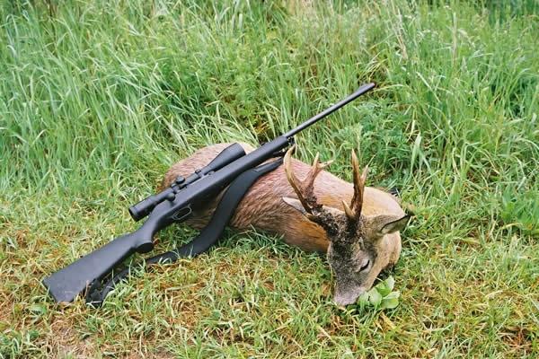 Штрафы за незаконную охоту